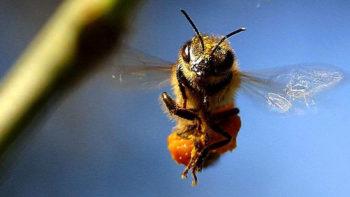 Permalink zu:Insektenschutz